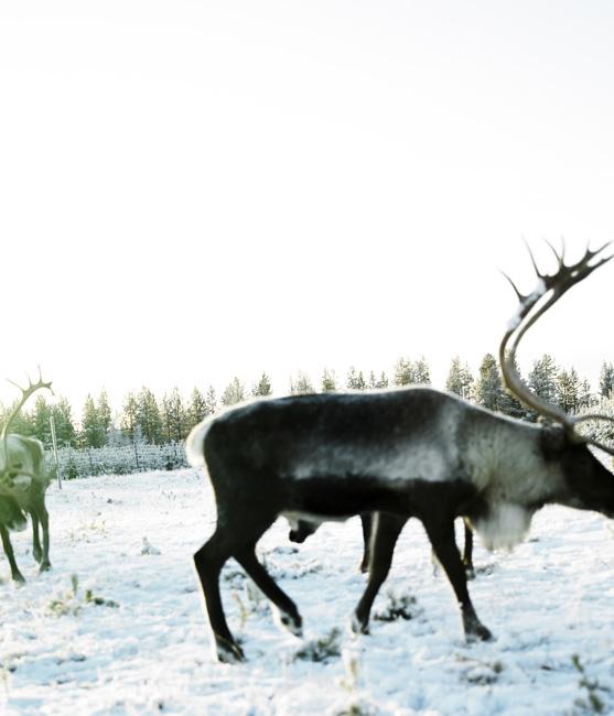 Schweden_Lappland_00006