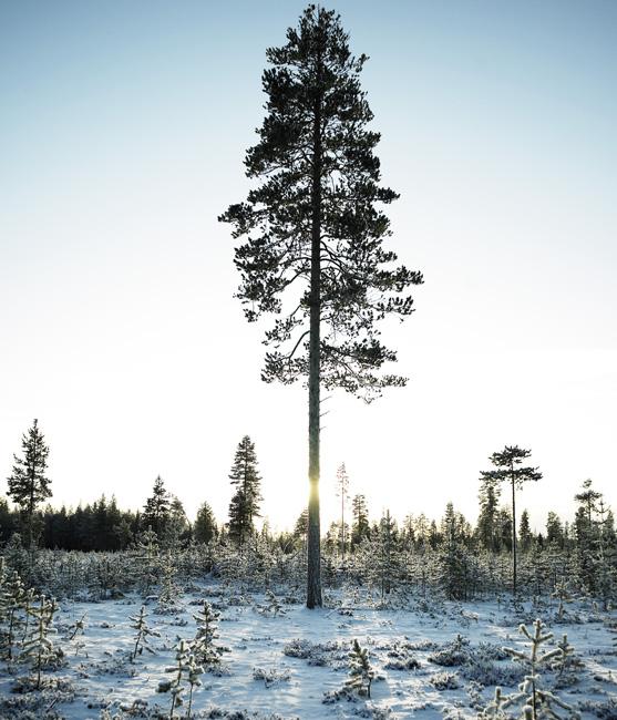Schweden_Lappland_00013