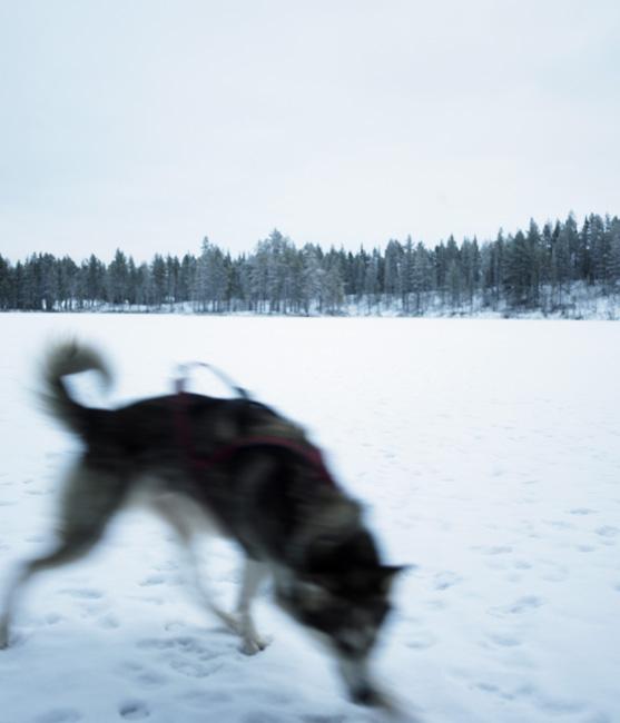 Schweden_Lappland_00094
