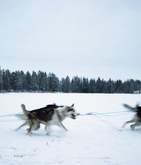 Schweden_Lappland_00097